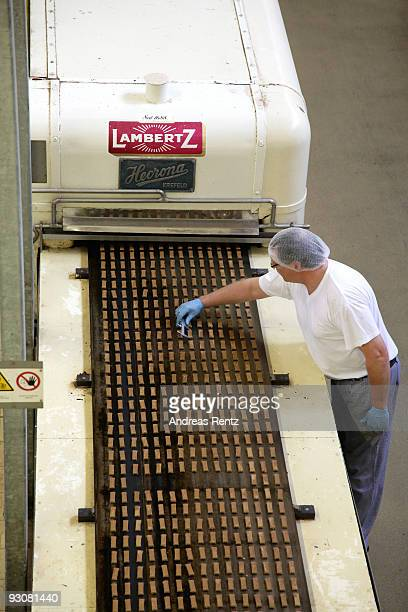 An employee is measuring the length of the cookie dough as they are running on an automatic conveyor belt at the gingerbread bakery Henry Lambertz on...