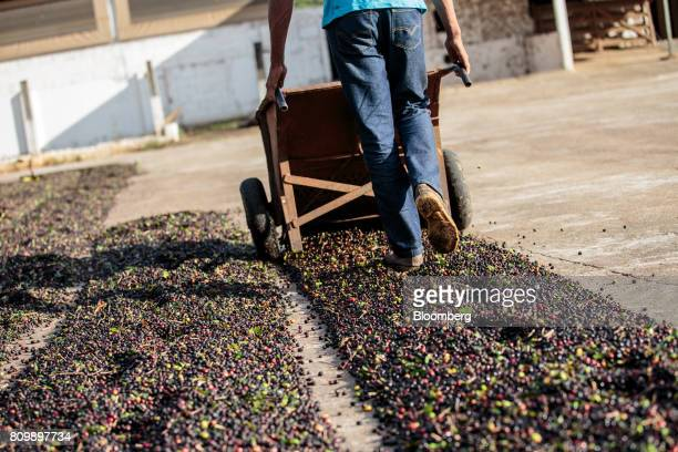 An employee lays out coffee cherries to dry at a plantation in Guaxupe Minas Gerais state Brazil on Friday June 16 2017 The coffee market could face...