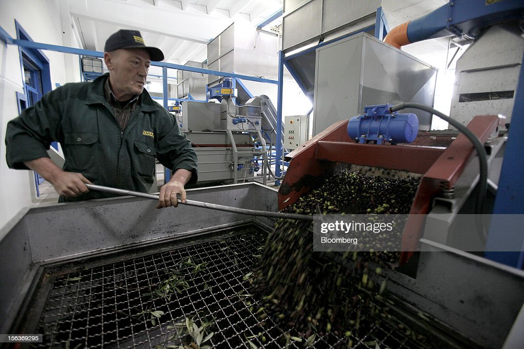 An employee monitors freshly-picked olives as they are prepared for cleaning and processing into oil at Industria Olearia Biagio Mataluni Srl's factory in Montesarchio near Benevento, Italy, on Monday, Nov. 12, 2012. Italian olive-oil exports rose 5.7 percent to a record last year, boosted by demand from the U.S. as well as France and Germany, agricultural-markets researcher Ismea said. Photographer: Alessia Pierdomenico/Bloomberg via Getty Images