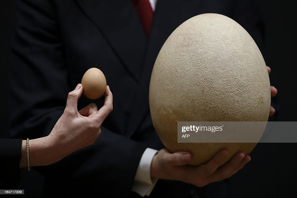 An employee of Christie's auction house poses with a complete sub-fossilised Elephant Bird egg (R) and a chicken's egg (L) in London on March 27, 2013 during a press preview of their April 'Travel, Science and Natural History' sale. This pre-17th century egg of the extinct Elephant Bird, the largest bird ever to have lived, is approximately 100 times larger than the average chicken's egg and is estimated to fetch 20,000 - 30,000 GBP when it goes on sale on April 24, 2013.