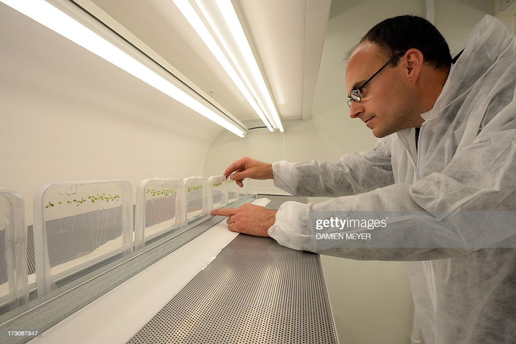 An employee of Goemar, a society specialised in sustainable technologies for agriculture, controls the growth of seeds, on July 5, 2013 at the company plant in Saint-Malo, western France. Based in Saint-Malo, Goemar's main activity is to develop clean products destined for agricultural use, for plant nutrition and plant protection.