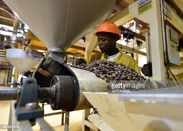 An employee of the CEMOI chocolate factory watches as cocoa beans pass from a conveyor belt into a grinding machine at the CEMOI cocoa processing...