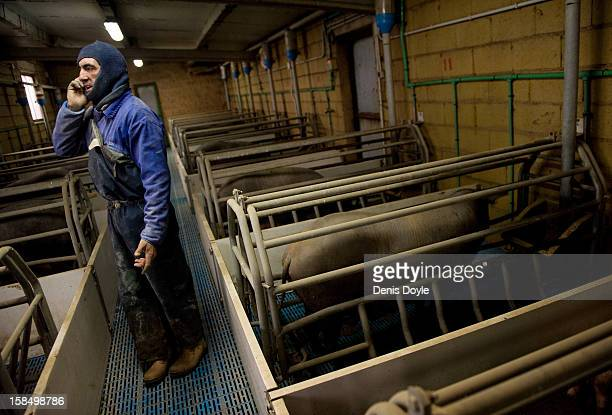 An employee of the Fermin Jamones company takes a call from the farm outside the village of La Alberca on December 14 2012 near Salamanca Spain...
