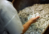 An employee prepares dragees on January 9 2014 in Verdun eastern France at the Leon Braquier factory which speciality is named 'Dragees de Verdun'...