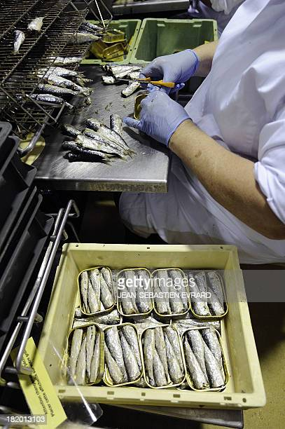An employee removes sardine tails on September 25 2013 in Quiberon western France at the canning factory 'La Belle Iloise' The company employs 200...