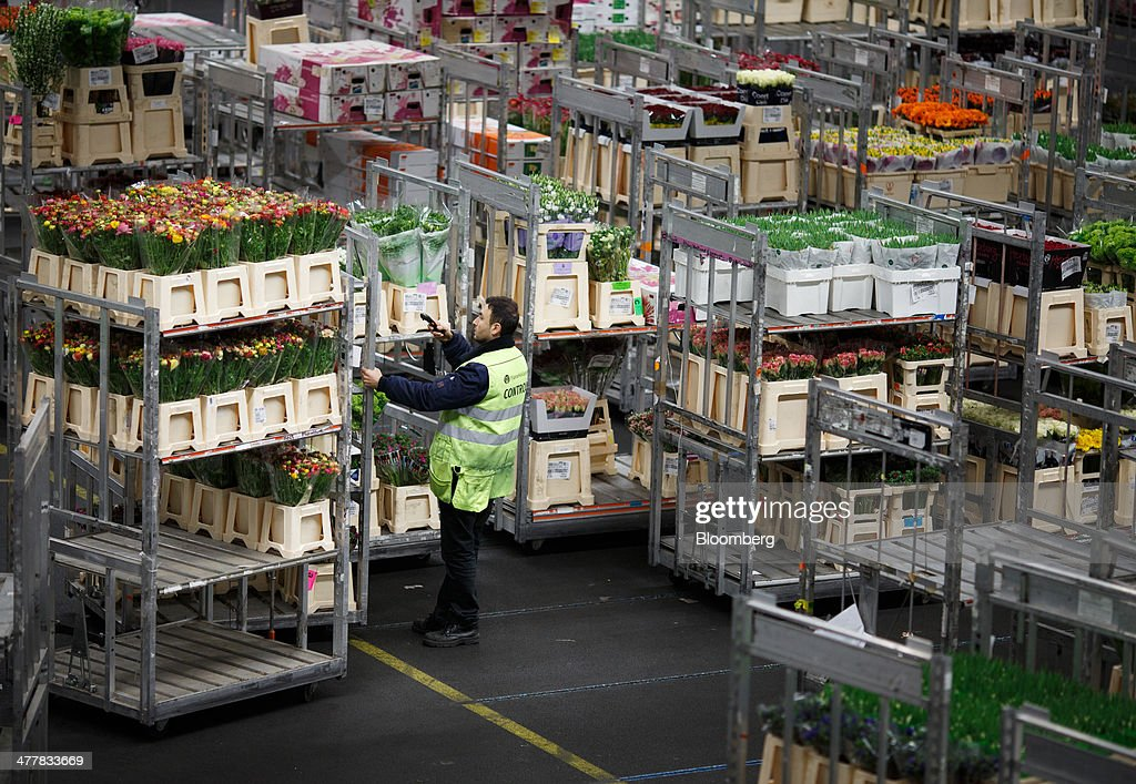An employee scans information as cages of flowers sit in storage before distribution at FloraHolland, the largest flower trade center in the world, in Aalsmeer, Netherlands, on Tuesday, March 11, 2014. The Netherlands' flower and plant exports, the world's biggest, fell 2.3 percent last year as declining consumer purchasing power was compounded by cold spring weather in Europe and a summer heat wave that hurt sales. Photographer: Jasper Juinen/Bloomberg via Getty Images