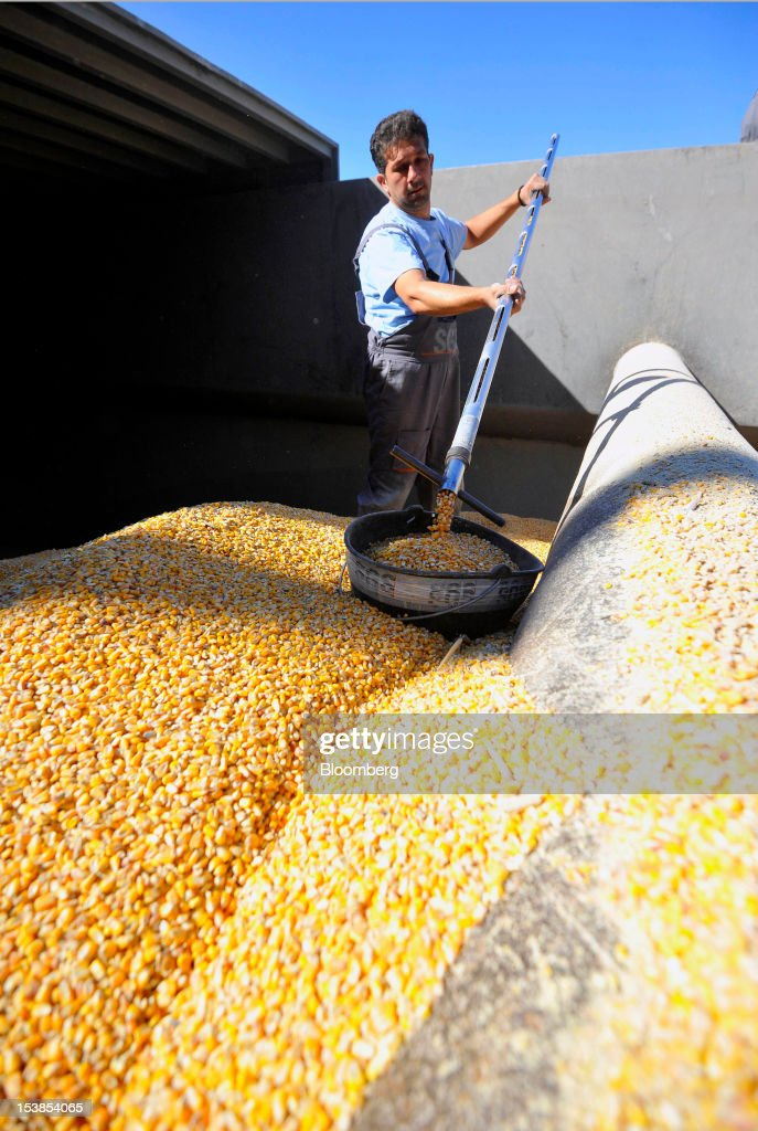 An employee selects samples of corn grain from the hold of the Dutch cargo ship Amice II before shipping at Granexport AD port, part of MK Group, on the Danube river in Pancevo, Serbia, on Tuesday, Oct. 9, 2012. Goods volumes on Europe's longest river after the Volga are 80 percent lower than on the Rhine, the region's busiest waterway, according to EU figures. Photographer: Oliver Bunic/Bloomberg via Getty Images
