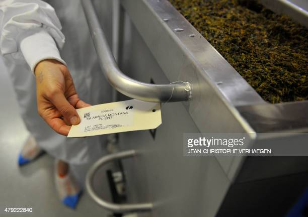 An employee shows the label of Arnica Montana plants that will be macerated before the extraction of a mother tincture at the Lehning Laboratoires...