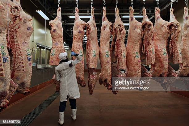 An employee stamps a trademark of Kobe beef at beef carcass before the start Kobe beef auction operated by Kobe Chuo Chikusan Niuke Ltd at the...