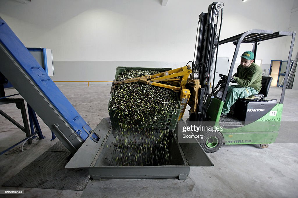 An employee uses a forklift truck to tip a crate of freshly-picked olives into a cleaning machine ahead of processing into oil at Industria Olearia Biagio Mataluni Srl's factory in Montesarchio near Benevento, Italy, on Monday, Nov. 12, 2012. Italian olive-oil exports rose 5.7 percent to a record last year, boosted by demand from the U.S. as well as France and Germany, agricultural-markets researcher Ismea said. Photographer: Alessia Pierdomenico/Bloomberg via Getty Images