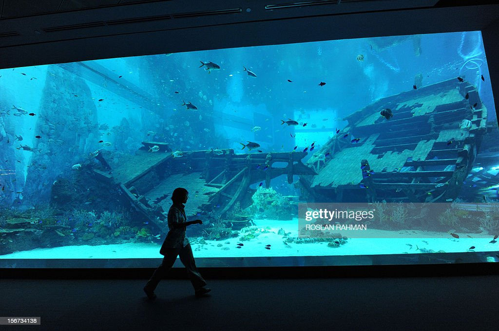 An employee walks past a replica of a shipwreck through one of the marine animal habitat at the South East Asia aquarium, the world's largest oceanarium in Sentosa Resort World marine life park during a media preview in Singapore on November 20, 2012. The aquarium will be home to 100,000 marine animals of over 800 species in 45 million litres of water that will opens to the public on November 22.