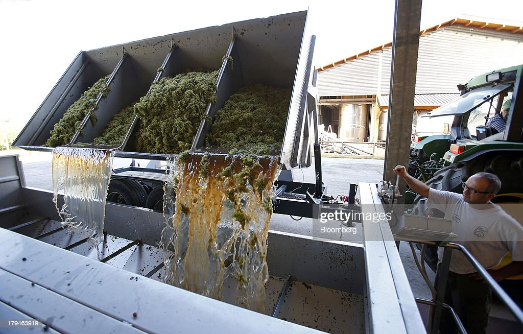 An employee watches as freshly harvested grapes, picked for their use in Prosecco wine, fall from a truck into a storage vat at I Magredi vineyard in Pordenone, Italy, on Tuesday, Sept. 3, 2013. Italy's Agriculture Ministry has begun to investigate suspected sales of imitation Prosecco sparkling wine in its native Veneto region. Photographer: Alessia Pierdomenico/Bloomberg via Getty Images