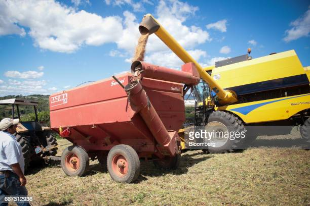 An employee watches as soybeans are loaded into a truck after being harvested at the Santa Cruz farm near Atibaia Brazil on Wednesday March 29 2017...