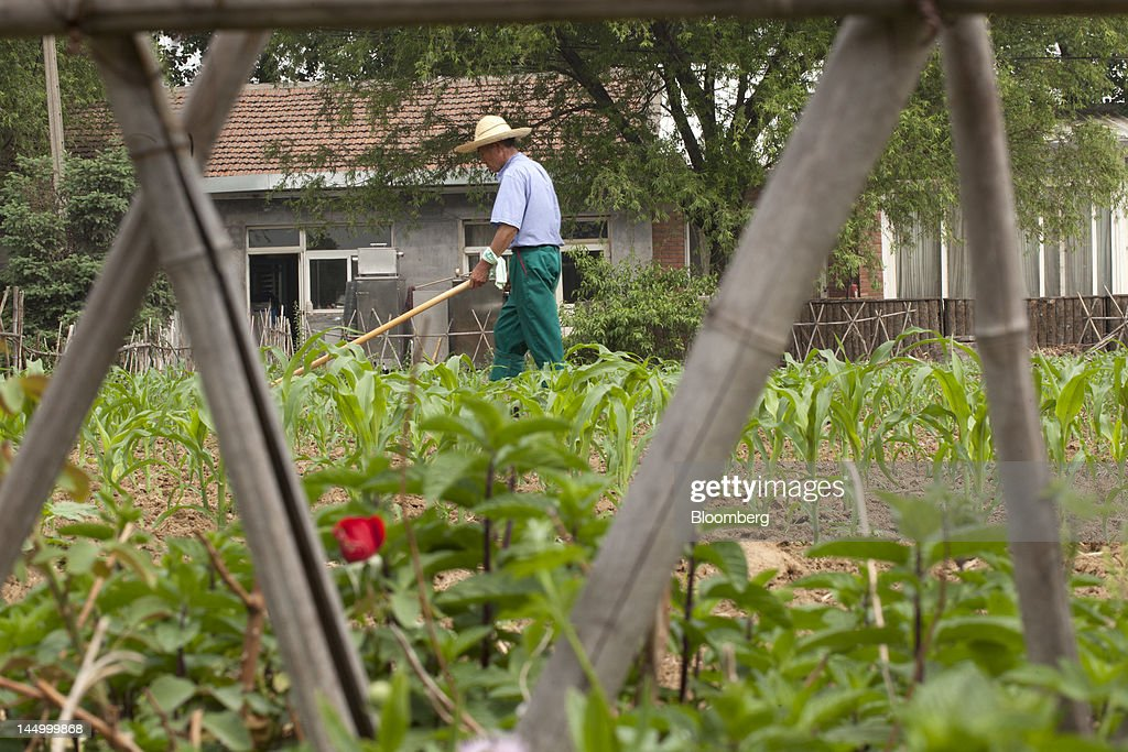 An employee works at a farm that practices organic farming techniques in Beijing, China, on Tuesday, May 22, 2012. China's farmland shrank 8.33 million hectares (20.6 million acres) in the past 12 years, Chen Xiwen, Premier Wen Jiabao's top agriculture adviser, said last year. Photographer: Nelson Ching/Bloomberg via Getty Images