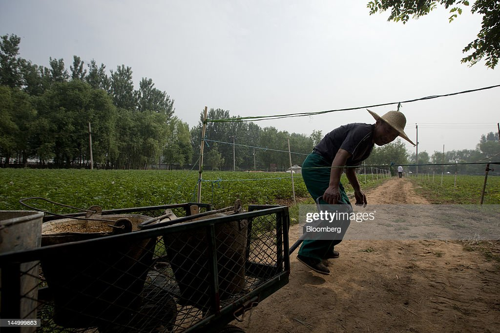 An employee works with feed at a farm that practices organic farming techniques in Beijing, China, on Tuesday, May 22, 2012. China's farmland shrank 8.33 million hectares (20.6 million acres) in the past 12 years, Chen Xiwen, Premier Wen Jiabao's top agriculture adviser, said last year. Photographer: Nelson Ching/Bloomberg via Getty Images