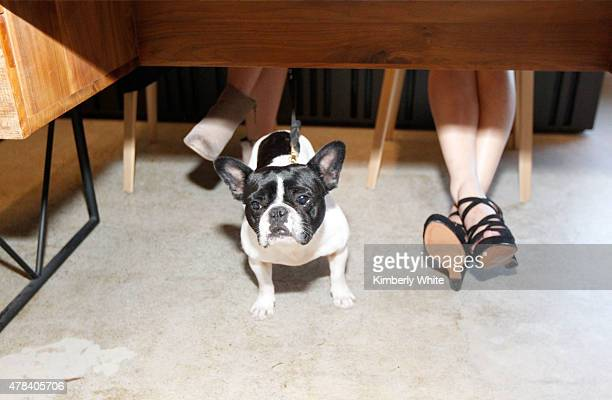 An employee's dog hangs out during the launch of the July Issue at the new WIRED office on June 24 2015 in San Francisco California