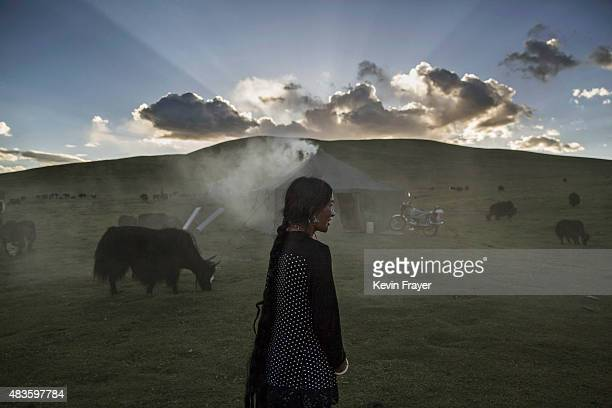 An ethnic Tibetan nomad woman stands with her Yak herd at their summer grazing area on July 24 2015 on the Tibetan Plateau in Yushu County Qinghai...