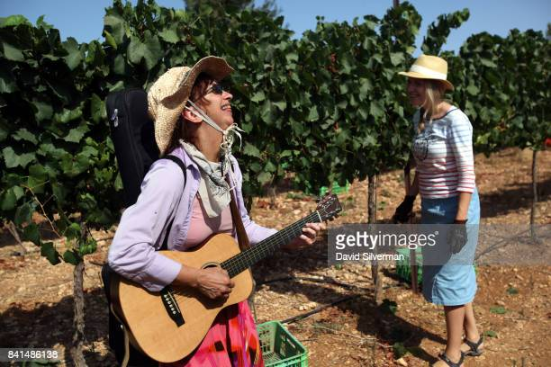 An Evangelical Christian volunteer sings Hebrew songs as others harvest Chardonnay grapes for Psagot Winery in a vineyard on July 24 2017 in the...