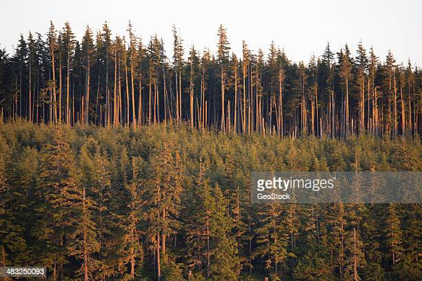 An example of select clear-cut deforestation