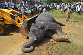An excavator removes the carcass of an elephant after it was killed by poachers at Kothalguri village in Nagaon district in the northeastern state of...