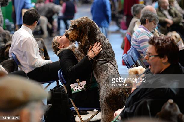 An exhibitor embraces an Italian Spinone dog on the second day of the Crufts dog show at the National Exhibition Centre in Birmingham central England...
