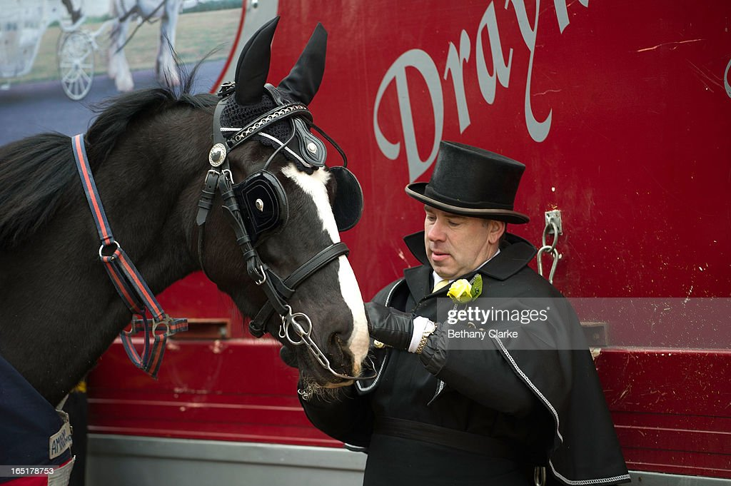 An exhibitor prepares his horse for the parade on April 1, 2013 in Ardingly, United Kingdom. The Parade is an amalgamation of two traditional parades, the London Cart Horse Parade, founded in 1885 and the London Van Horse Parade, founded in 1904. The objectives of these parades was to improve the general condition and treatment of London's working horses and to encourage drivers to take a humane interest in the welfare of their animals. There is a wide variety of breeds of animal ranging from donkeys to Dutch Friesians and Gelderlander's, to magnificent heavy horses.