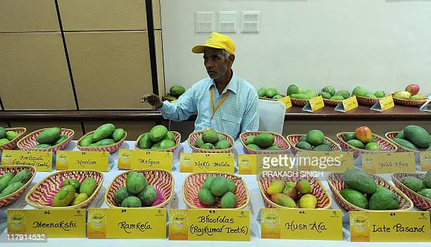 An exhibitor shows different varieties of mango's during a mango festival organised by Delhi Tourism in New Delhi on July 2 2011 The festival is...