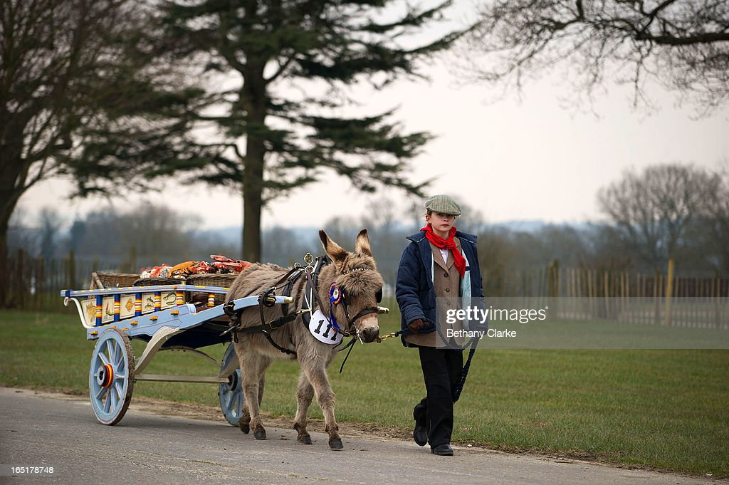 An exhibitor walks her donkey before the horse parade on April 1, 2013 in Ardingly, United Kingdom. The Parade is an amalgamation of two traditional parades, the London Cart Horse Parade, founded in 1885 and the London Van Horse Parade, founded in 1904. The objectives of these parades was to improve the general condition and treatment of London's working horses and to encourage drivers to take a humane interest in the welfare of their animals. There is a wide variety of breeds of animal ranging from donkeys to Dutch Friesians and Gelderlander's, to magnificent heavy horses.