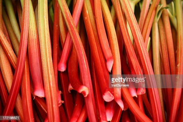 An extensive array of ripe red rhubarb stalks