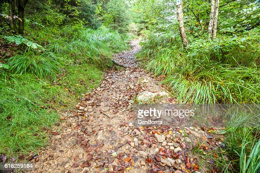 an footpath in the forest : Foto de stock