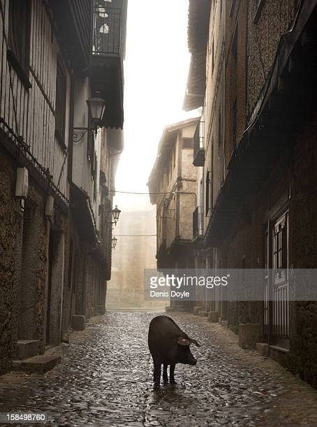 An Iberian pig walks down a street in the village of La Alberca on December 14 2012 near Salamanca Spain The pig is free to roam in the village until...