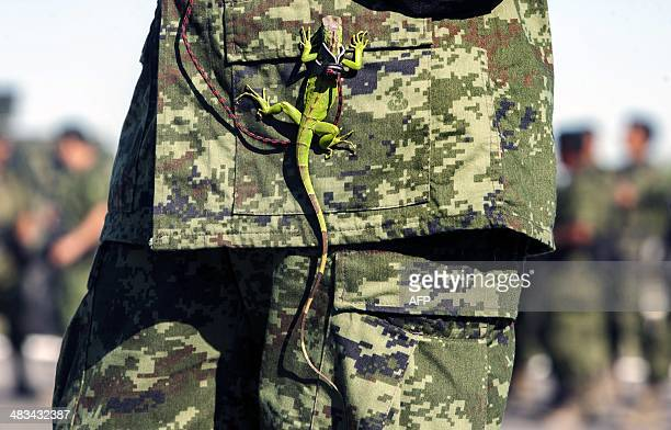 An iguana hangs from the uniform of a Mexican soldier during the burning of marijuana heroin cocaine and methamphetamine at a military base in...