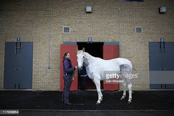 An Iish Sport Horse is walked from the preparation room to the induction and recovery box ahead of its operation at Newmarket Equine Hospital on...