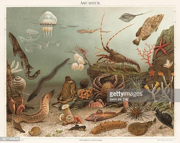 An illustration of sea life from an edition of Meyers KonversationsLexikon a nineteenthcentury German encyclopedia