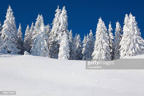 An image of fur trees smothered in white snow