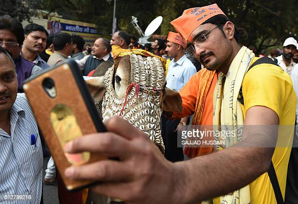 An Indian activist from the Bharatiya Gau Kranti Manch group takes a selfie with a cow during a protest against the killing of cows and in favour of...