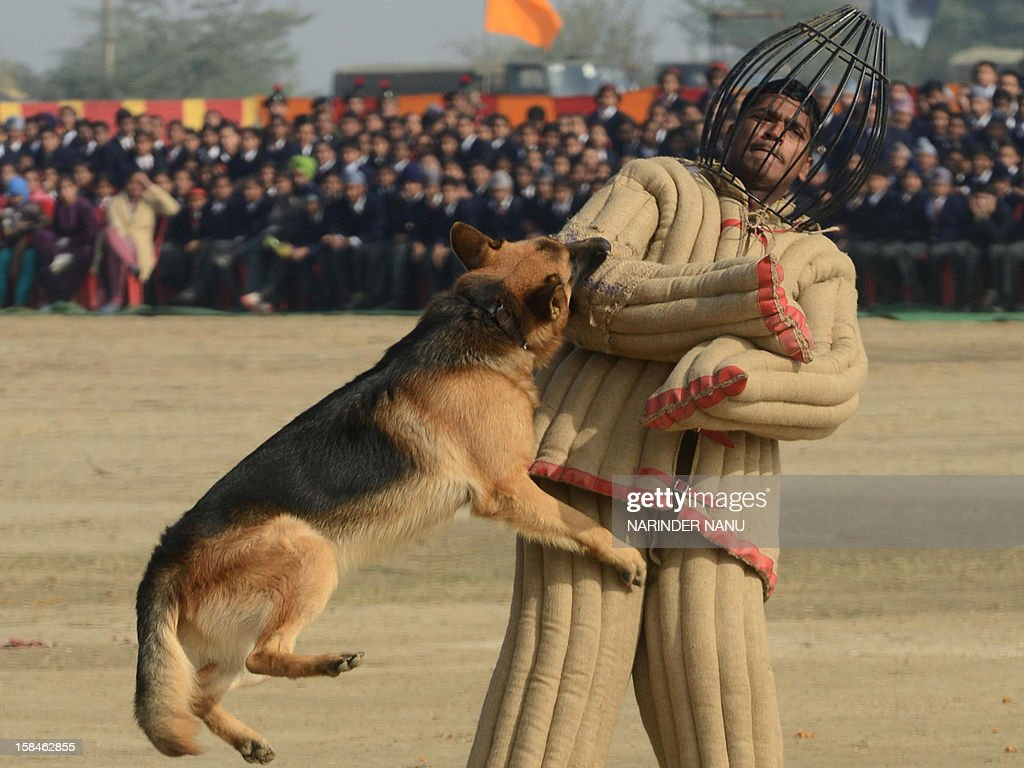 An Indian Army K9 unit performs a demonstration drill during an Army Mela (fair) and exhibition at Khasa, some 15 kms from Amritsar, on December 17, 2012. The Army Mela (fair ), organised by the Vajra Corps, displayed weapons, tanks, aircraft and military equipment to students and civilian visitors of the event.