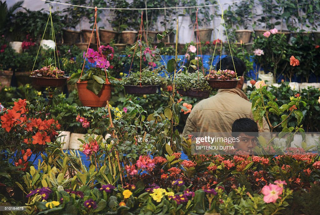 An Indian boy looks through a display of plants at an annual flower show in Siliguri on February 14, 2016. AFP PHOTO / Diptendu DUTTA / AFP / DIPTENDU DUTTA