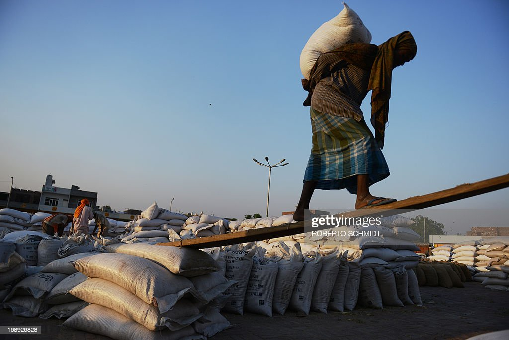 An Indian daily-wage labourer carries a 50 kilo sack of wheat onto a truck at a grain distribution point on the outskirts of Amritsar on May 16, 2013. This years wheat harvest is expected to be more bountiful than last year, India's Agriculture Ministry said recently. India which is the second largest producer of wheat in the world is expected to produce about 93.6 million metric tons. Some reports estimate that this will mean a decrease in the local price of wheat and a boost in exports due to the large surplus of grain stored. AFP PHOTO/ROBERTO SCHMIDT