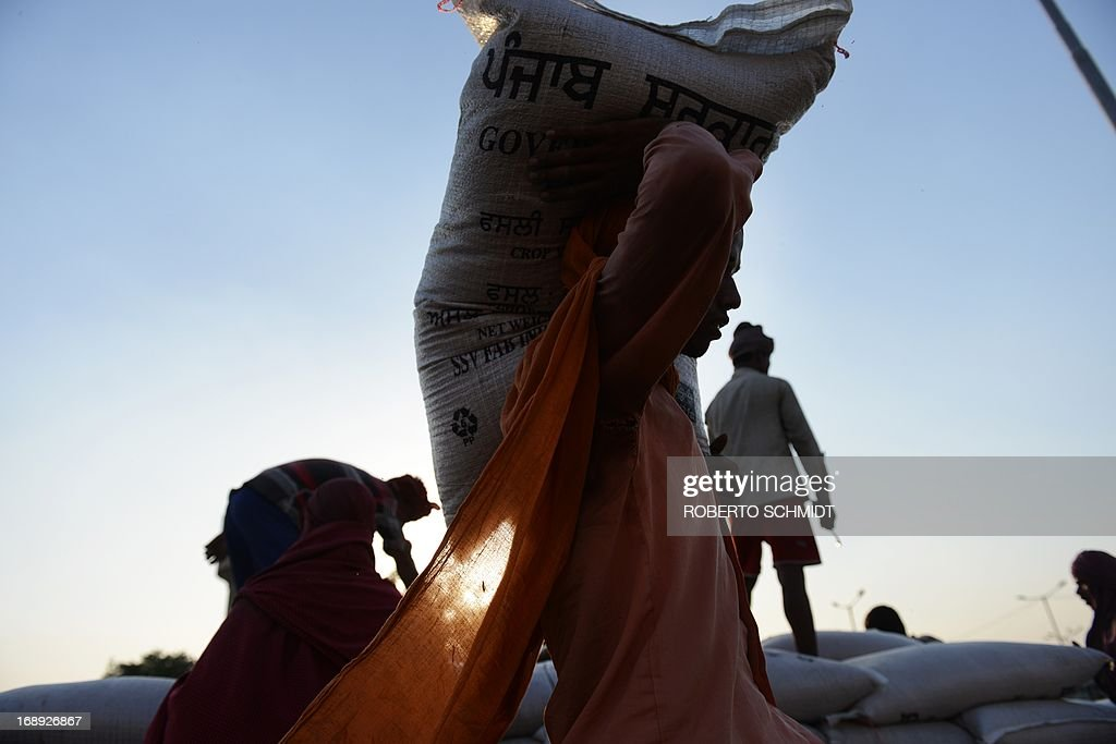 An Indian daily-wage labourer loads a 50 kilo sack of wheat onto a truck at a grain distribution point on the outskirts of Amritsar on May 16, 2013. This years wheat harvest is expected to be more bountiful than last year, India's Agriculture Ministry said recently. India which is the second largest producer of wheat in the world is expected to produce about 93.6 million metric tons. Some reports estimate that this will mean a decrease in the local price of wheat and a boost in exports due to the large surplus of grain stored.