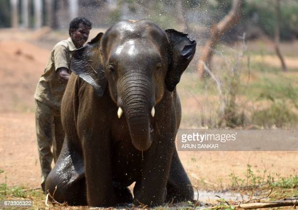 An Indian elephant gets a shower on a hot summer day at Anna National Zoological Park in Chennai on April 26 2017 / AFP PHOTO / ARUN SANKAR