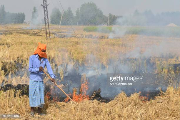 An Indian farm labourer burns paddy stubble in a field on the outskirts of Amritsar on October 14 2017 The burning of waste agricultural products is...