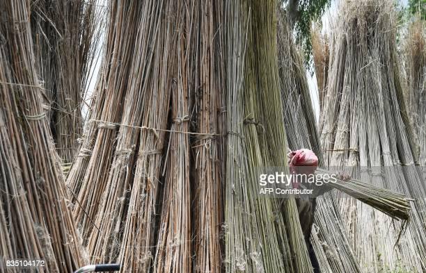 An Indian farmer carries stalks of freshly harvest jute at Krishnanagar in Nadia District some 130kms east of Kolkata on August 18 2017 Jute is one...