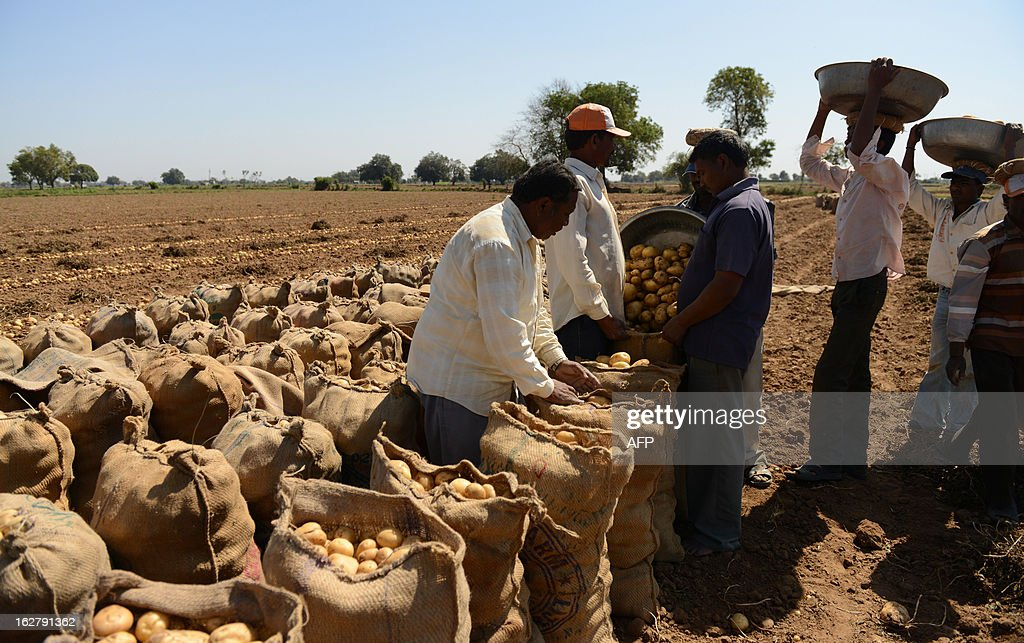 An Indian farmer harvests potatoes at a field at Nadol village of Dehgam Taluka, some 35 kms from Ahmedabad on the eve of announcement of Union Budget 2013, on February 27, 2013. Owing to the prolonged winter season, the yield of the potato crop has been higher. India's economy will pick up speed, inflation will fall and the fiscal deficit will be reined in during the next financial year, an official forecast published on the eve of the budget said. AFP PHOTO / Sam PANTHAKY