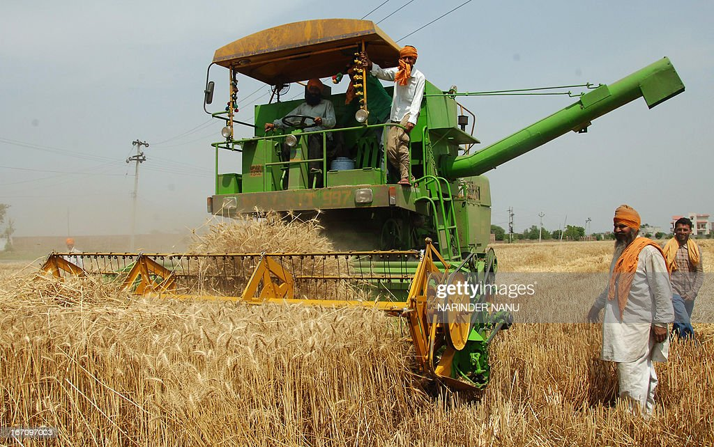 An Indian farmer helps a combine plough a wheat field on the outskirts of Amritsar on April 20, 2013. Punjab is India's largest wheat producing state, contributing nearly 70 percent of the national total.