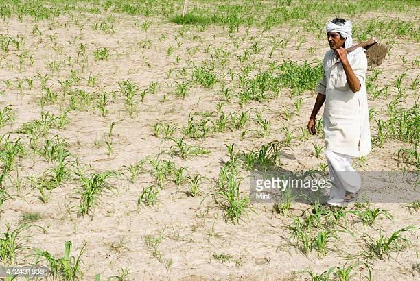 An Indian farmer looks at his damaged crops on dry land due to delay in rainfall this monsoon at village on August 22 2009 in Palwal India Photo by...
