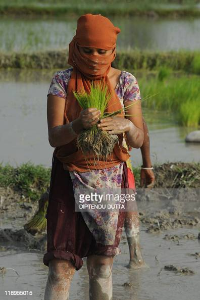 An Indian farmer plants rice in a paddy field in Milanmore village on the outskirts of Siliguri on July 4 2011 India's weather office in May forecast...