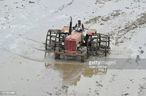 An Indian farmer ploughs a field as part of preparations for paddy crop planting in Medak district some 60 kilometres from Hyderabad on June 16 2015...