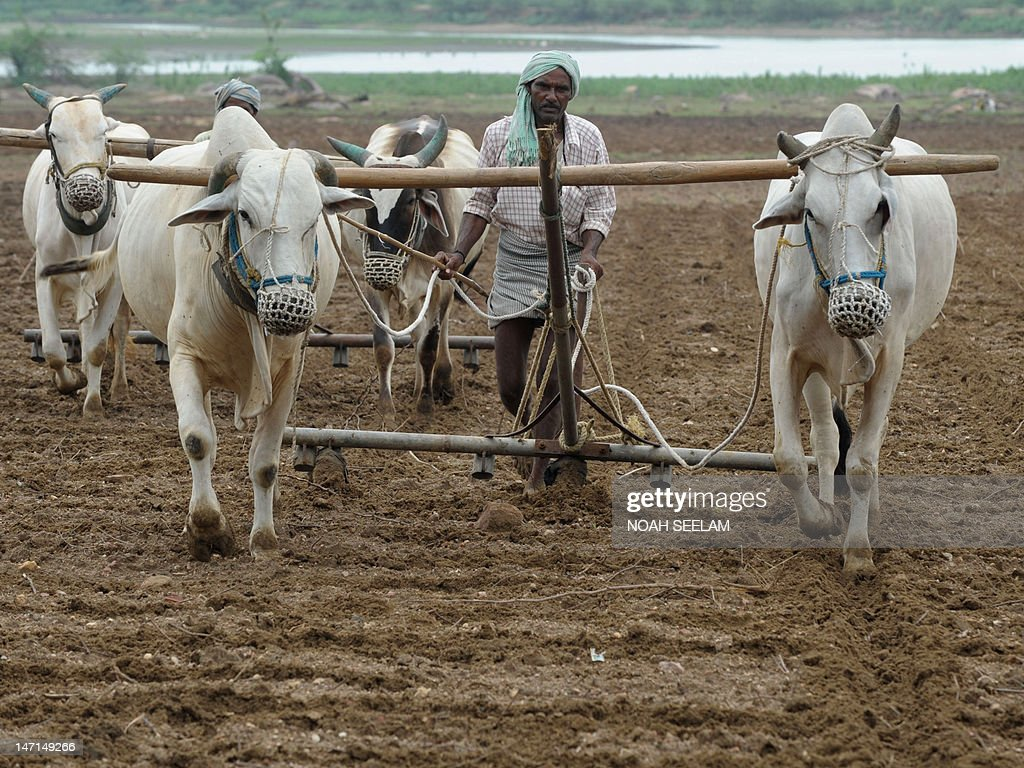 An Indian farmer ploughs an agricultural field ahead of anticipated monsoon rains in Warangal, some 140 kilometers from Hyderabad, on June 26, 2012. Indian agriculture gets 60 percent of its precipitation from the rains and a bad monsoon can spell financial disaster for the country's 235 million farmers. While agriculture's share of India's economy has shrunk to 14 percent from 30 percent in the early 1990s, bountiful rains are still vital to national economic fortunes. AFP PHOTO / Noah SEELAM