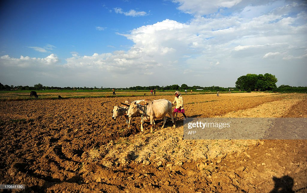 An Indian farmer ploughs his field in Soron Village near Allahabad on June 14, 2013. Oxen are thought to have first been harnessed and put to work around 4000 BC. AFP PHOTO / SANJAY KANOJIA